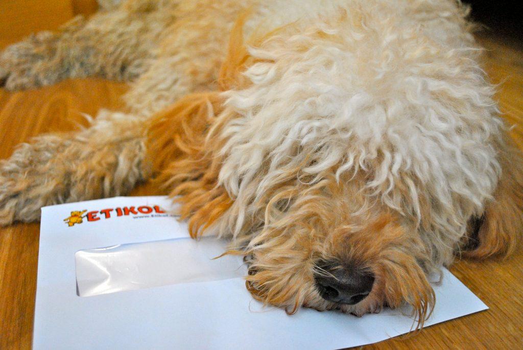 Bertie with Etikol envelope